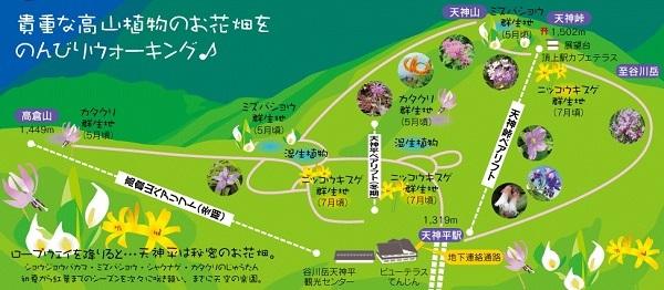 谷川岳のお花